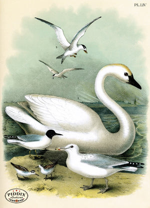 Birds Pdxc3158 Color Illustration