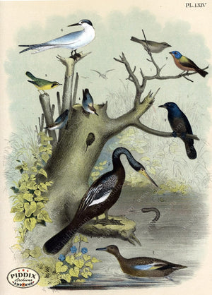 Pdxc3159 -- Birds Color Illustration