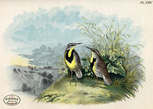 Pdxc3162 -- Birds Color Illustration