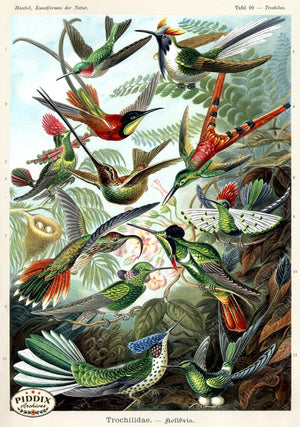 Pdxc3188 -- Birds Color Illustration