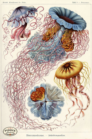 Pdxc3197 -- Underwater Creatures Color Illustration