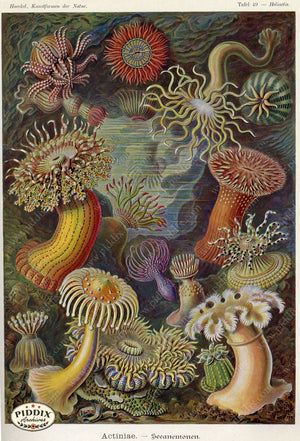 Pdxc3219 -- Underwater Creatures Color Illustration
