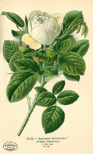 Pdxc3934 -- Flowers Color Illustration