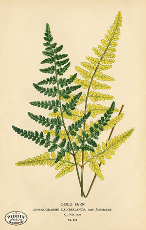 Pdxc4156 -- Plants & Leaves Color Illustration