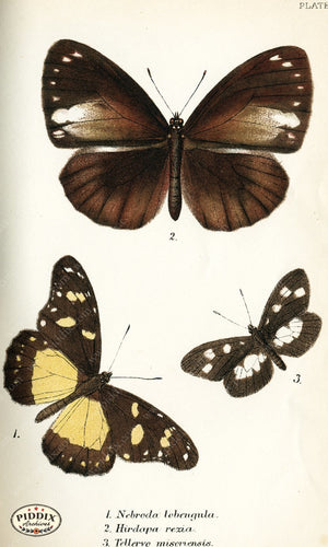 Pdxc4343 -- Butterflies Color Illustration