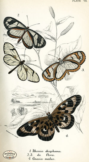 Pdxc4344 -- Butterflies Color Illustration