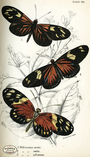 Pdxc4345 -- Butterflies Color Illustration
