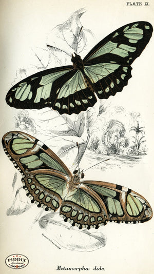 Pdxc4346 -- Butterflies Color Illustration
