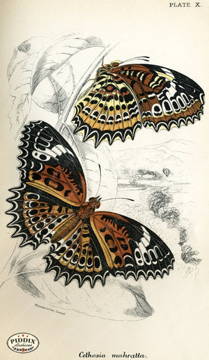 Pdxc4347 -- Butterflies Color Illustration