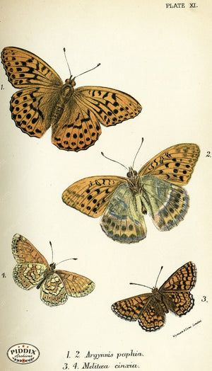 Pdxc4348 -- Butterflies Color Illustration