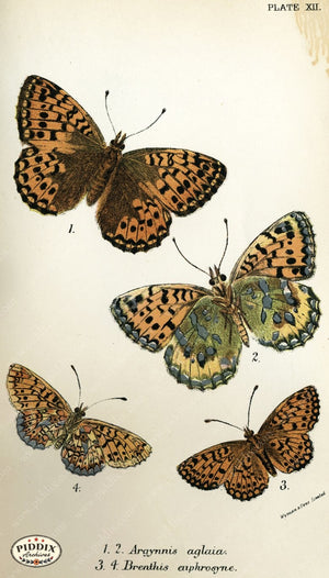 Pdxc4349 -- Butterflies Color Illustration