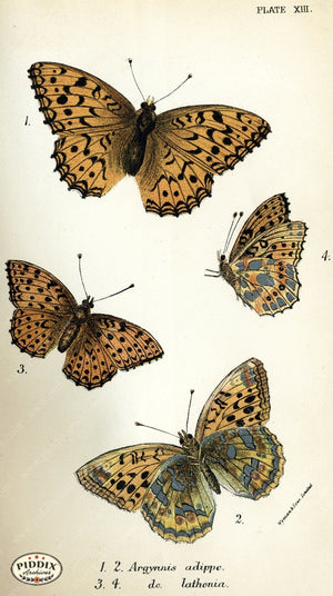 Pdxc4350 -- Butterflies Color Illustration