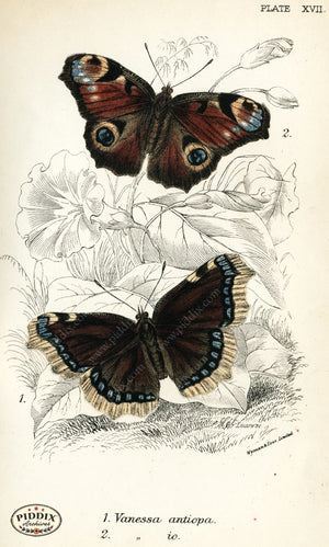 Pdxc4354 -- Butterflies Color Illustration