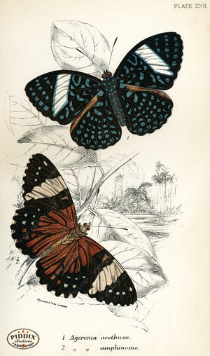 Pdxc4359 -- Butterflies Color Illustration