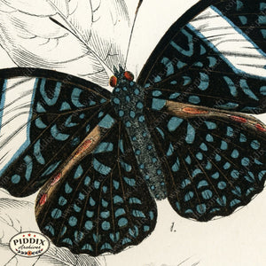 Pdxc4359F -- Butterfly Wing Details Color Illustration