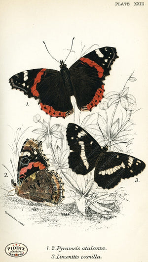 Pdxc4360 -- Butterflies Color Illustration