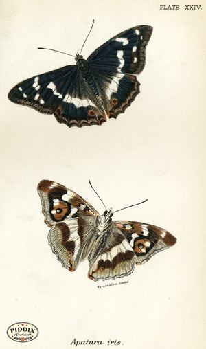 Pdxc4361 -- Butterflies Color Illustration