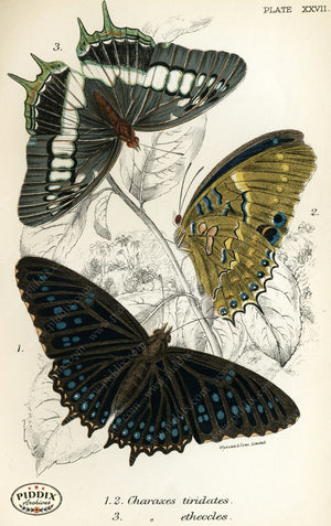 Pdxc4364 -- Butterflies Color Illustration