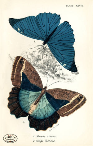 Pdxc4365 -- Butterflies Color Illustration