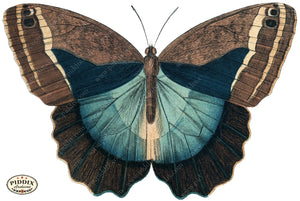 Pdxc4365B -- Butterflies Color Illustration