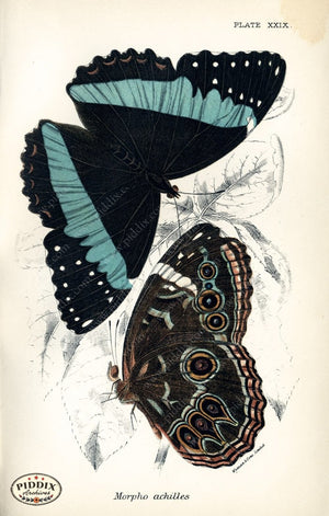 Pdxc4366 -- Butterflies Color Illustration