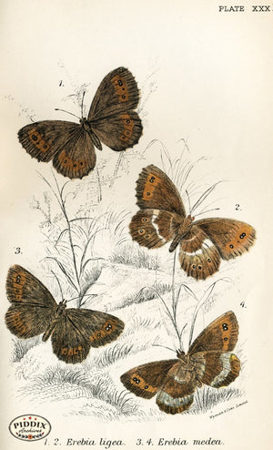Pdxc4367 -- Butterflies Color Illustration