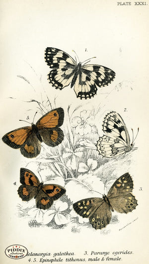 Pdxc4368 -- Butterflies Color Illustration