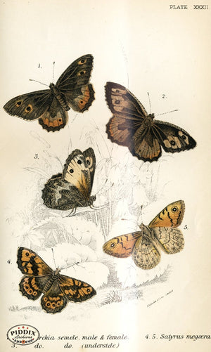 Pdxc4369 -- Butterflies Color Illustration