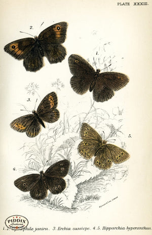 Pdxc4370 -- Butterflies Color Illustration