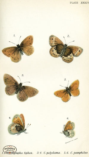 Pdxc4371 -- Butterflies Color Illustration