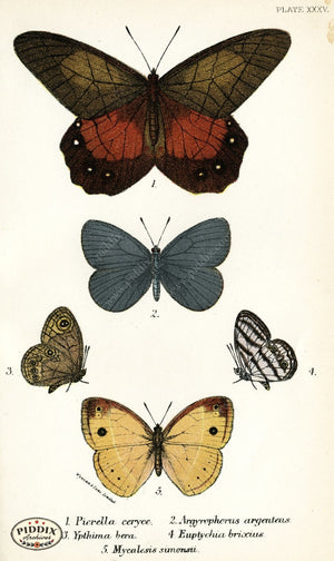 Pdxc4372 -- Butterflies Color Illustration
