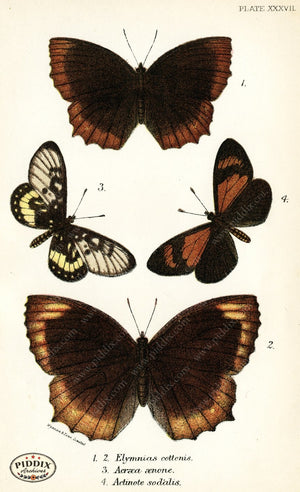 Pdxc4374 -- Butterflies Color Illustration