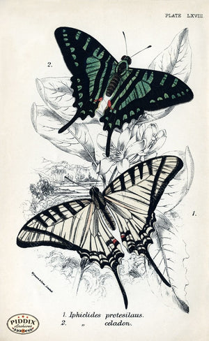 Pdxc4378 -- Butterflies Color Illustration