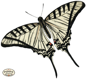 Pdxc4378B -- Butterflies Color Illustration