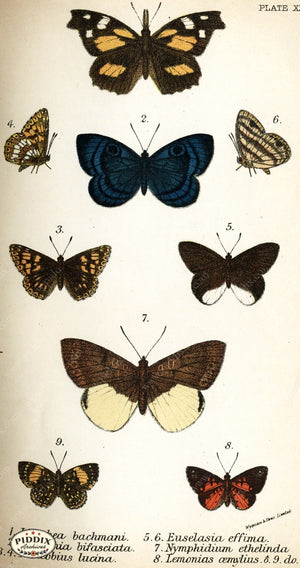 Pdxc4382 -- Butterflies Color Illustration
