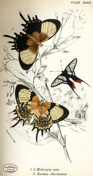 Pdxc4383 -- Butterflies Color Illustration