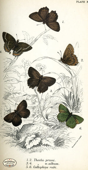Pdxc4385 -- Butterflies Color Illustration