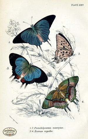 Pdxc4386 -- Butterflies Color Illustration