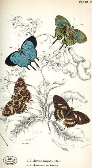Pdxc4387 -- Butterflies Color Illustration