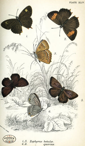 Pdxc4388 -- Butterflies Color Illustration