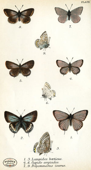 Pdxc4389 -- Butterflies Color Illustration