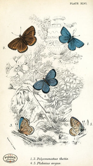 Pdxc4390 -- Butterflies Color Illustration