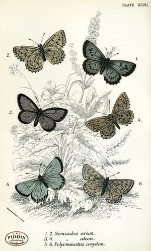 Pdxc4391 -- Butterflies Color Illustration