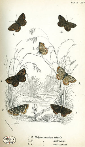 Pdxc4392 -- Butterflies Color Illustration