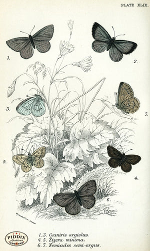 Pdxc4393 -- Butterflies Color Illustration