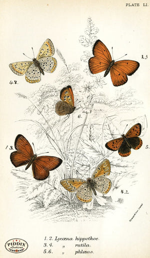 Pdxc4395 -- Butterflies Color Illustration