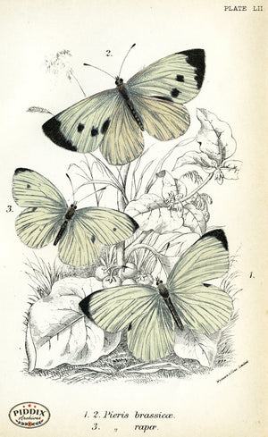 Pdxc4396 -- Butterflies Color Illustration