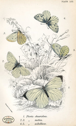 Pdxc4397 -- Butterflies Color Illustration
