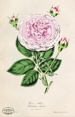 Pdxc5239 -- Roses Color Illustration