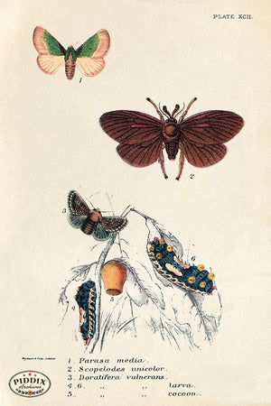 PDXC5296 -- Butterflies Color Illustration